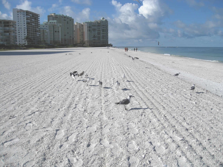 Enjoying Wildlife on the Beach